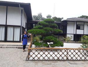 Jardim Zen Pavilhão Japonês Ibirapuera