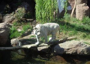 Zoo Metropolitano de Santiago